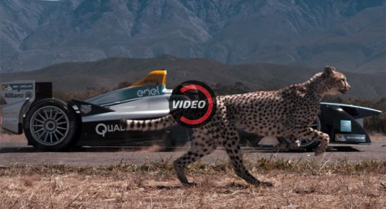 What's Faster: An Electric Racing Car Or A Cheetah?