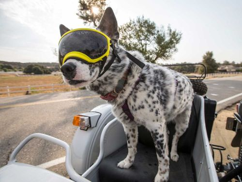 """Motorcyclist Introduces """"Dog, Gone!"""" Video Series"""